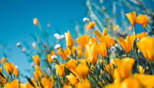 春は植物達と交感しよう